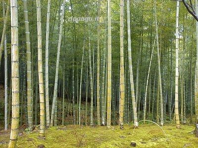 Scoprire Kyoto: Arashiyama