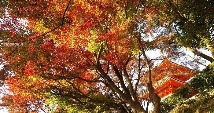 Kyoto In Autunno  Quando Andare  Quali Luoghi Visitare