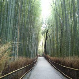 Itinerari in Giappone di 5, 7, 10, 14 e 21 giorni
