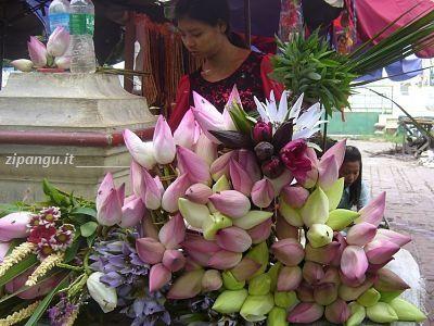Myanmar: il loto